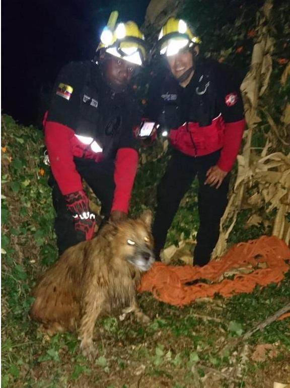 rescate animal2